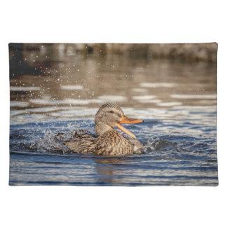 Mallard Duck at Downing Park Placemat