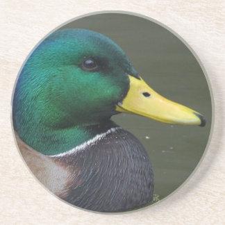 Mallard duck beverage coaster
