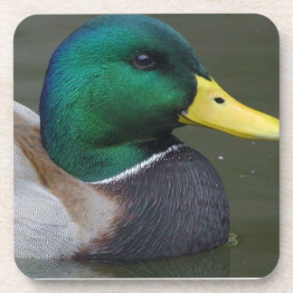 Mallard duck beverage coaster