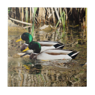 Mallard Duck Ceramic Photo Tile