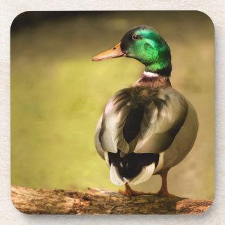 Mallard Duck Coasters