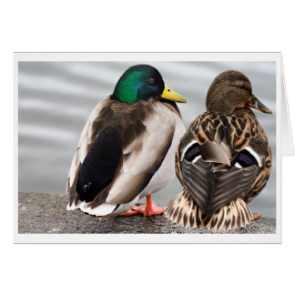 Mallard Duck Couple Card
