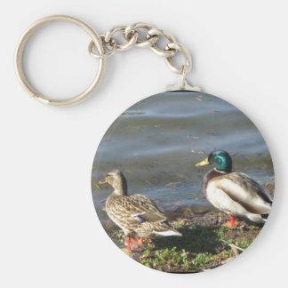 Mallard duck couple keychain