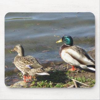 Mallard duck couple mousepad