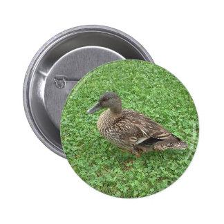 Mallard Duck Female Photo Pinback Buttons