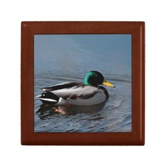 Mallard duck gift box