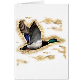 Mallard Duck Hunting Greeting Cards