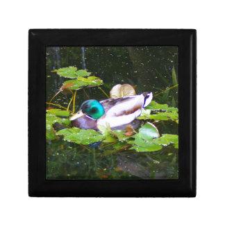 Mallard duck in a pond gift box