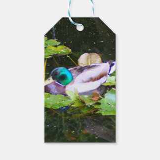 Mallard duck in a pond gift tags