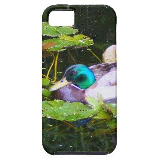 Mallard duck in a pond iPhone 5 case