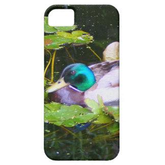 Mallard duck in a pond iPhone 5 cover