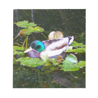 Mallard duck in a pond notepad