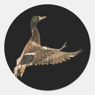 Mallard Duck in Flight Round Sticker