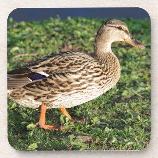 Mallard Duck in the Grass Coaster