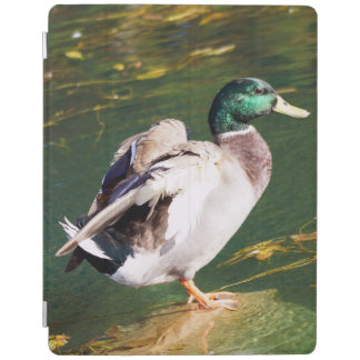Mallard Duck iPad Smart Cover iPad Cover