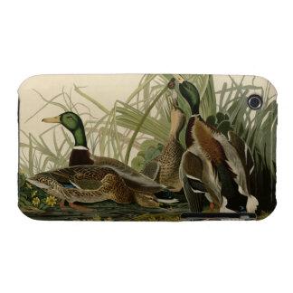 Mallard Duck iPhone 3 Covers