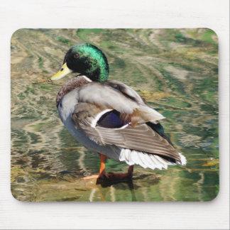 Mallard Duck Mousepad
