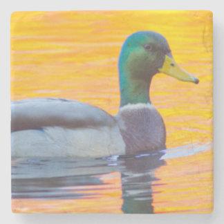 Mallard duck on orange lake, Canada Stone Coaster