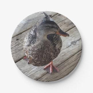 Mallard Duck Photo Paper Plate