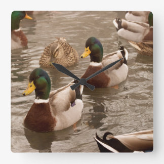Mallard Duck Photo Wall Clock