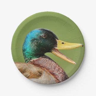 mallard duck portrait paper plate