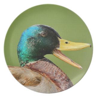 mallard duck portrait plate