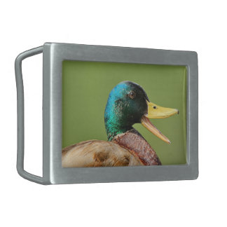 mallard duck portrait rectangular belt buckles