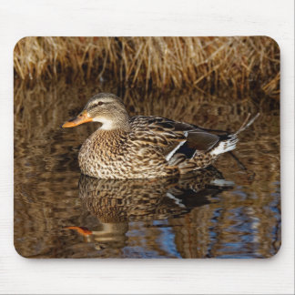 Mallard Duck Reflecting Mouse Pad