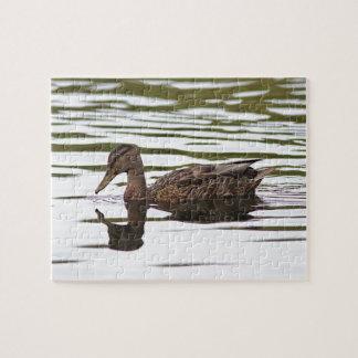 Mallard duck swimming puzzles