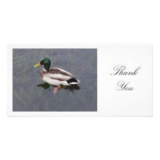 Mallard Duck - Thank You Card
