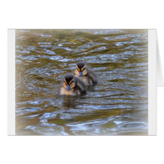 Mallard Ducklings Card