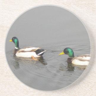 Mallard Ducks Drink Coasters