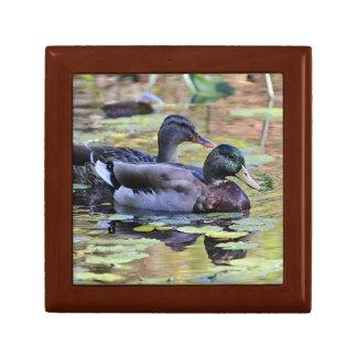 Mallard ducks gift box