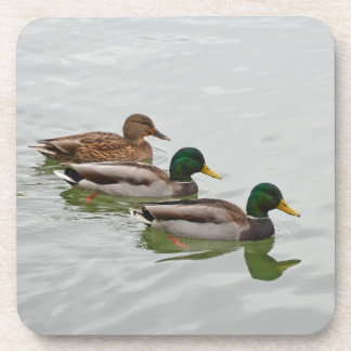 Mallard ducks print coaster