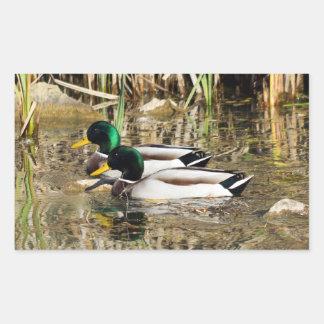 Mallard Ducks Rectangle Sticker