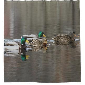 Mallard Ducks Shower Curtain