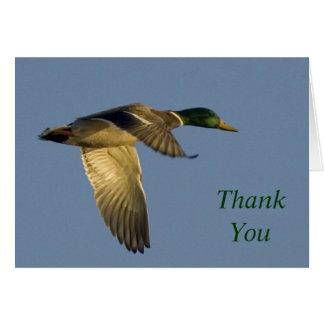 mallard flying in open sky thank you note card