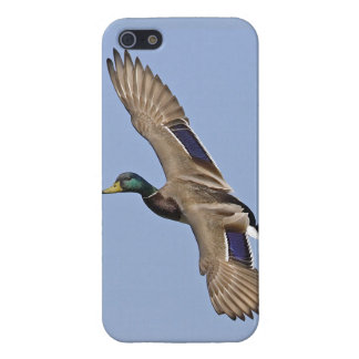 Mallard in Full Flight - iPhone 5 Cover - Savvy