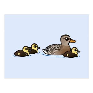 Mallard & three ducklings postcard