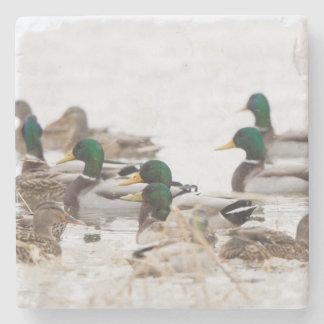 Mallards in wetland in winter stone coaster