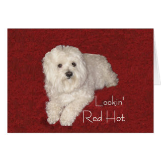 Maltese 60th Birthday Greeting Card on Red/White