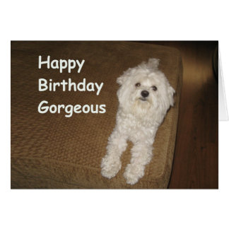 Maltese Birthday Wishes for Her Greeting Card