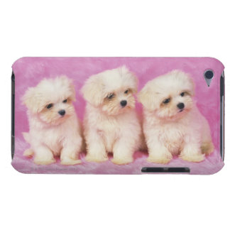 Maltese Dog; is a small breed of white dog that Barely There iPod Case