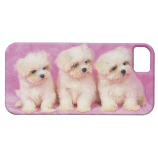 Maltese Dog; is a small breed of white dog that iPhone 5 Cases