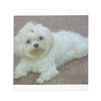 maltese laying notepad