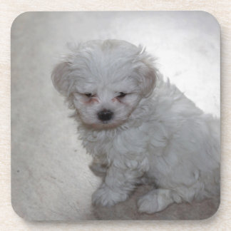 maltese pup coaster
