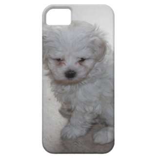 maltese pup iPhone 5 cases
