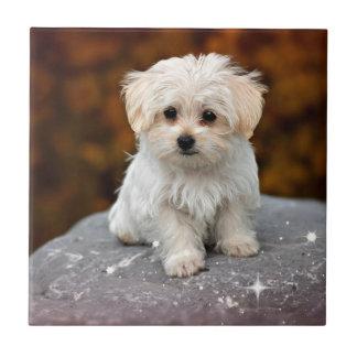 Maltese Puppy...adorable Ceramic Tile