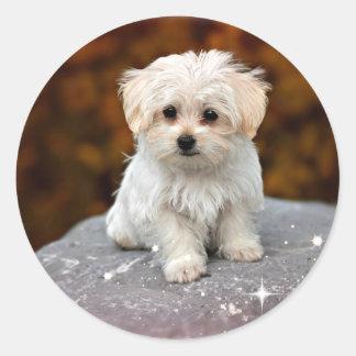 Maltese Puppy...adorable Classic Round Sticker