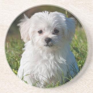 Maltese puppy coaster